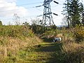 Pylon near Rudry - geograph.org.uk - 74366.jpg