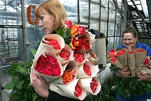 RIAN archive 377478 Flowers of Siberia greenhouse complex prepares its production for the March 8 holiday.jpg