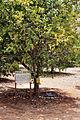 RLZ Beeri HaBanim Grove 05.JPG