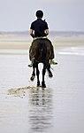 ROYAL HORSE ARTILLERY EQUESTRIAN EXERCISE IN NORFOLK MOD 45163002.jpg