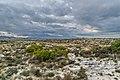 Rangipo Desert 16.jpg