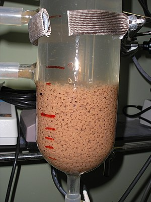 Aerobic granulation - SBR Reactor, with aerobic granules