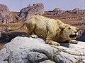 Reconstitution d'un lion des cavernes.jpg