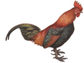 Red Junglefowl by George Edward Lodge white background.png