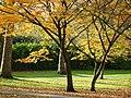 Regent's Park - geograph.org.uk - 1048159.jpg