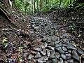 Restos de empedrado del Camino Real de Cruces - Panamá.jpg