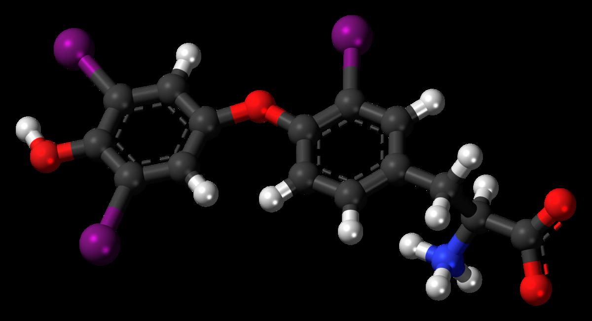 Resultado de imagen de triiodothyronine