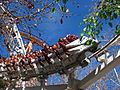 Revolution at Six Flags Magic Mountain (13208669805).jpg