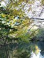Rhin Tortu Lumière d'automne 2010 10 08.JPG