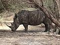 Rhino (474360597).jpg