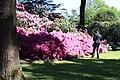Rhododendronpark Bremen 20090513 042.JPG