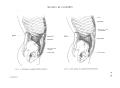 Richer - Anatomie artistique, 2 p. 57.png