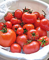Ripe Red Tomatoes.jpg