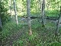 RiverMiesjokiJune2020.jpg