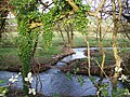 River Ebble, Bishopstone - geograph.org.uk - 667684.jpg