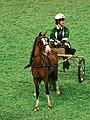 Roadster Pony (2920541482).jpg