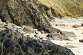 Rocky foreshore in Porthmelgan cove - geograph.org.uk - 1529693.jpg