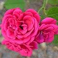 """Rosa """"Blue Parade"""" o POULbol. 06.jpg"""