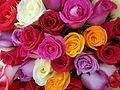 Rosas Multicolores.JPG