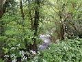 Ruisseau entre les arbres.JPG