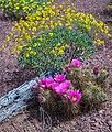 Saguaro Nat. Park (15553302963).jpg
