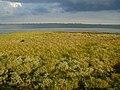 Saltmarsh vegetation Farlington Marshes - geograph.org.uk - 422711.jpg