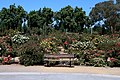 San Jose Municipal Rose Garden.JPG