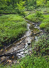 A narrow, partially dry creek runs between two plant-covered banks in a forest