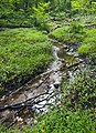 Saw Mill River headwaters September 2014.jpg