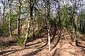 Schandorf - Tumulis in Bauernwald I (01).jpg