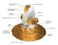 Schema del WMAP.png