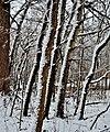 Schneider Woods 2 - panoramio.jpg