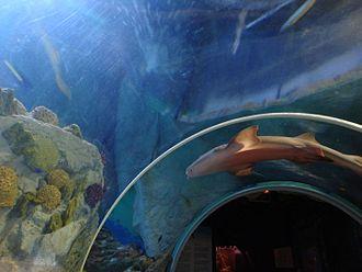 Sea Life Benalmádena - Underwater tunnel