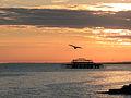 Seagull over West Pier (7025255165).jpg
