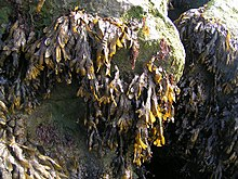 Photo of rocks covered by dried plant matter