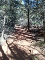 Secret Canyon Trail, Sedona, Arizona - panoramio (10).jpg