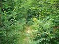 Sentier (35).jpg