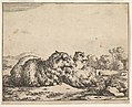 Sheep, from a set of 16 plates MET DP828262.jpg