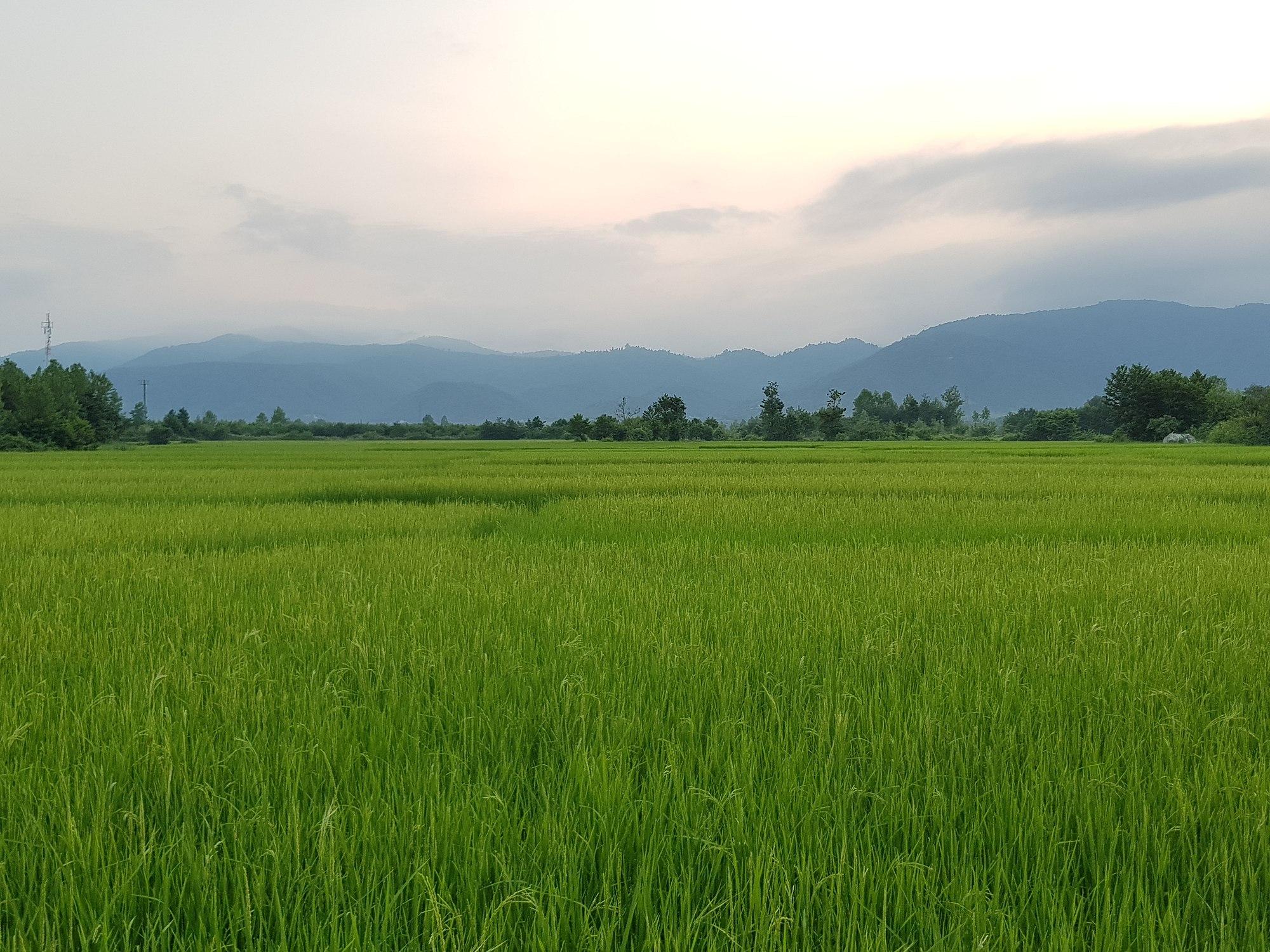 دهستان شیخنشین