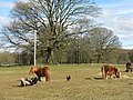 Shetland ponies and hens at St Ann's - geograph.org.uk - 730252.jpg