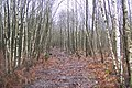 Shorts Wood - geograph.org.uk - 1618707.jpg