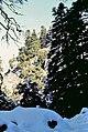 Sierra de las Nieves 1975 12.jpg