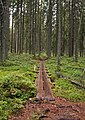 Siikaneva trail 2.jpg