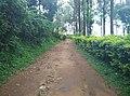 Sitargundu Estate, Kollengode South, Kerala 678508, India - panoramio.jpg