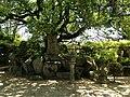 Site of Former Main Hall in Miyajidake Shrine.JPG