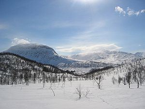 Scandinavian Montane Birch forest and grasslands - Winter is long and snowmelt is late at the treeline, Junkerdal, Norway.