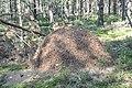 Skudru pūznis, Vecumnieku pagasts, Vecumnieku novads, Latvia - panoramio (2).jpg