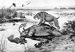 La Brea Tar Pits - Illustration of several species getting mired in the tar pits