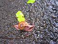 Snail SanthoshBabuK.jpg