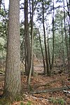 Snoose Creek State Natural Area.jpg